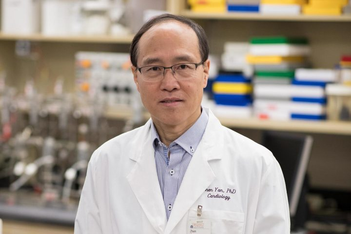 Zhen Yan, director of the Center for Skeletal Muscle Research at the Robert M. Berne Cardiovascular Research Center, said exercise helps prevent injury to muscles and nerves when blood flow is restored. (Photo by Dan Addison, University of Virginia)