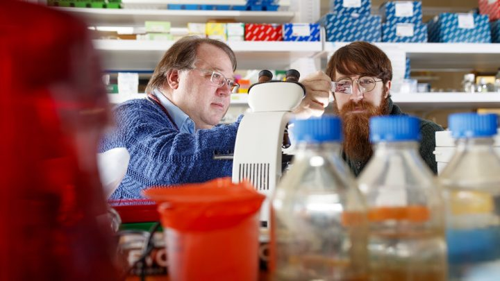 Peter Angeletti, associate professor of biological sciences, and Cameron Klein, graduate student in virology, have discovered a link between the cervical microbiome and whether women develop precancerous lesions. Image credit: Craig Chandler | University Communication