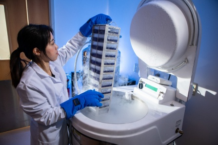 Prontip Saelee, PhD, a scientist at Tactiva Therapeutics, removes biological samples from a liquid nitrogen freezer. The samples contain cell lines that will be screened for tumor-targeting receptors. Image credit: Douglas Levere / University at Buffalo