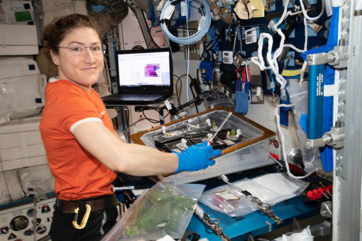 NASA astronaut Christina Koch conducts botany research aboard the International Space Station, where she's been living and working since March 14, 2019. Her mission has been extended, and she will remain at the station until February 2020. Credits: NASA