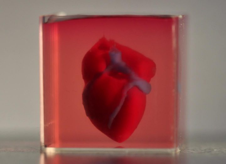 A 3D-printed, small-scaled human heart engineered from the patient's own materials and cells. Image credits: Advanced Science / Courtesy of the authors