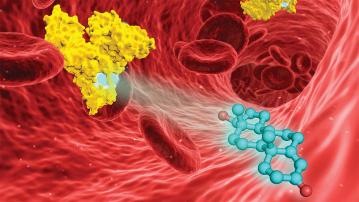 A rendering of testosterone (blue) and the blood protein known as serum albumin (yellow) in the bloodstream. A new study has revealed that medications may compete with testosterone for seats aboard serum albumin, potentially explaining drops in the hormone among some men. Image credit: Chemical Science / Royal Society of Chemistry