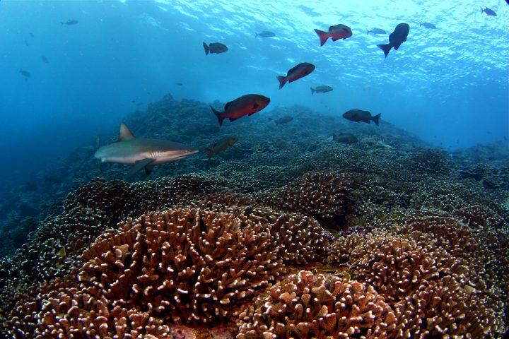 Microbes surrounding coral reefs change in sync by day and by night, scientists have found. Image credit: Brian Zgliczynski via NSF