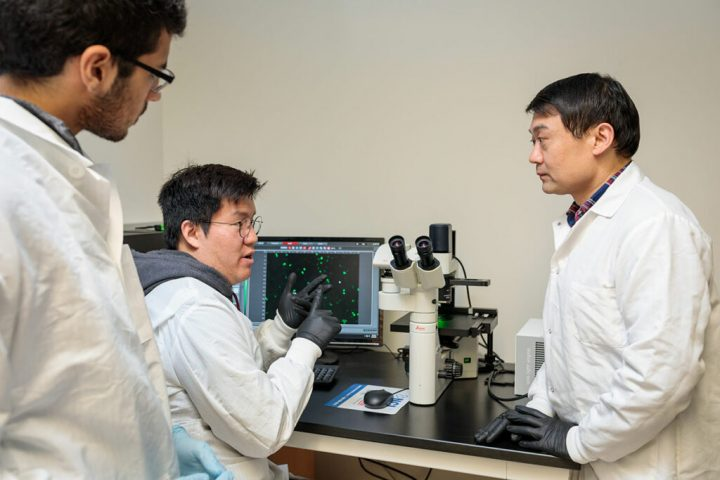 Ting Wang (right), graduate students Hyo Sik Jang (center) and Nakul M. Shah, and their colleagues at Washington University School of Medicine in St. Louis have shown that so-called jumping genes play an important role in driving cancer. Their findings could lead to the development of future cancer therapies based on understandings of gene regulation rather than mutation. Image credit: Matt Miller/Washington University School of Medicine