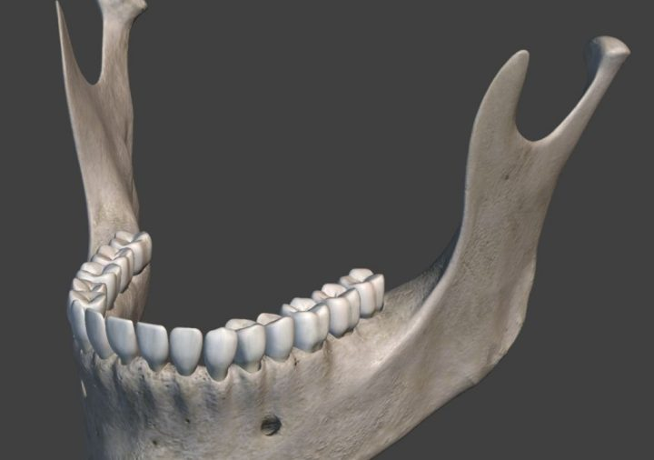 Lower jaw. Image credit: Piotr Siedlecki via PublicDomainPictures.net, CC0 Public Domain