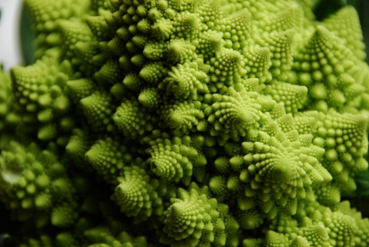The branches of Romanesco broccoli demonstrate self-similarity. The branches are also described as a fractal, or successively smaller copies of themselves. Image credit: cyclonebill via Flickr, CC BY-SA 2.0
