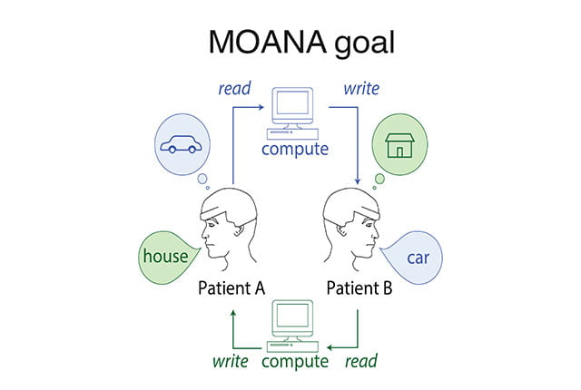 Rice University neuroengineers are leading an ambitious DARPA-funded project to develop MOANA, a nonsurgical device capable of both decoding neural activity in one person's visual cortex and recreating it in another's in less than one twentieth of a second. Image credit: J. Robinson/Rice University