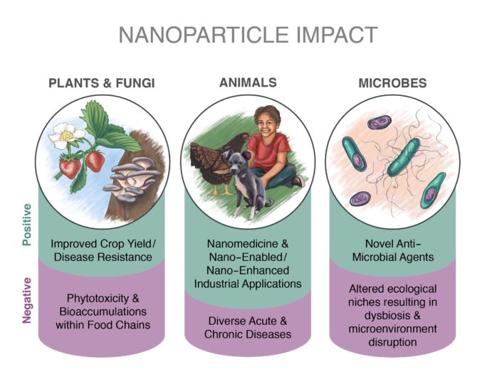 Anthropogenic and natural nanomaterials enter biological systems across the tree of life through multiple routes.   Rose Perry, PNNL