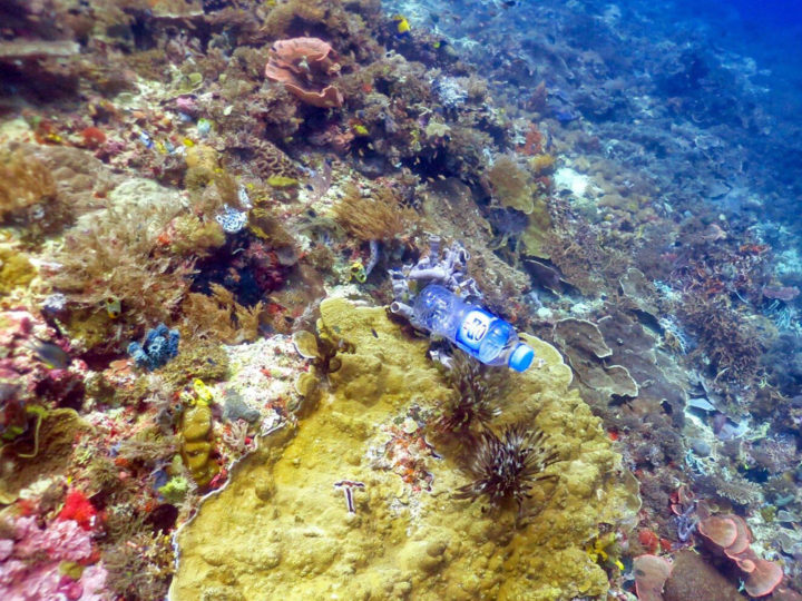 Lamb and her team found that on coral without plastic, the disease rate was 4 percent, but the figure skyrocketed to 89 percent when plastic – such as this bottle – was touching the coral. Image credit: Joleah Lamb
