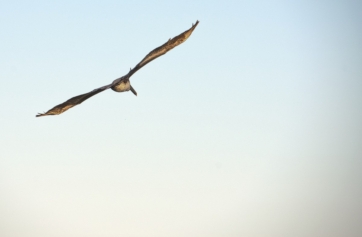 Flying bird. Image credit: Pxhere, CC0 Public Domain