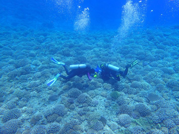 Becca Maher, left, and undergraduate Sonora Meiling (diving on the fore reef of Moorea, French Polynesia, where the coral species Pocillopora meandrina is often found. (photo provided by Becca Maher, OSU College of Science).