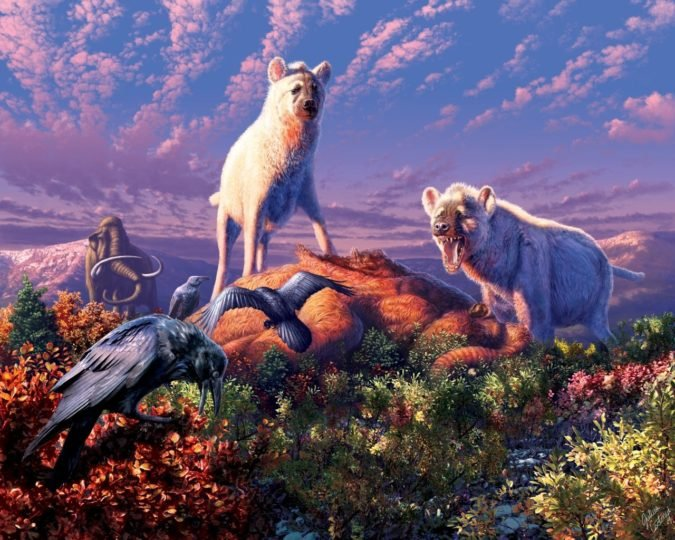 An artist's rendering of ancient Arctic hyenas belonging to the genus Chasmaporthetes. A new study reports that two enigmatic fossil teeth found in Yukon Territory in Canada belonged to Chasmaporthetes, making the teeth the first known fossils of hyenas found in the Arctic. Image credit: Julius T. Csotonyi for University at Buffalo