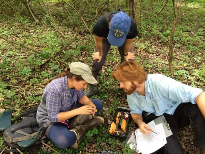 Student researchers (l to r) Liz Ames, Alicia Brunner and Jay Wright with a Prothonotary Warbler tagged for the study. (Photo: Christopher Tonra/Ohio State University)