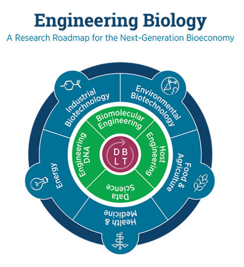 The roadmap for synthetic or engineering biology identifies five research areas that the federal government needs to invest in to fuel the bioeconomy and keep the U.S. at the forefront of the field. Image credit: UC Berkeley