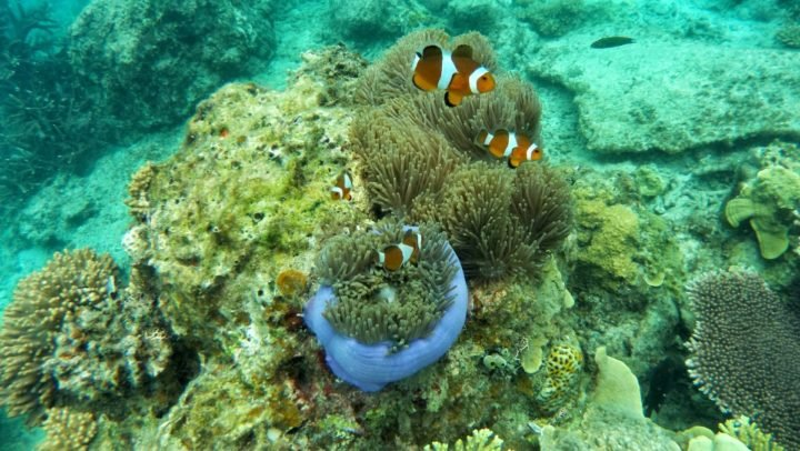 Fish among corals and sea anemones. Image credit: Pxhere, CC0 Public Domain