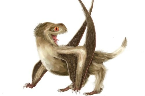 Reconstruction of the studied pterosaur, with four different feather types over its head, neck, body, and wings, and a generally ginger-brown colour. Illustration by Yuan Zhang.
