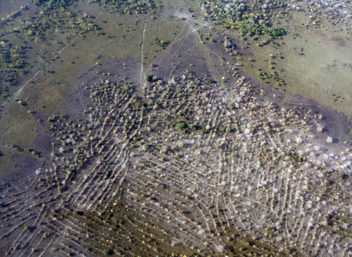 An aerial photograph of a Pre-Colombian raised field from the Llanos de Moxos, Bolivia. Complex societies with social hierarchies and extensive earthworks, including raised fields, supported intensive agriculture of a limited number of crops, but eventually soil leaching and other factors left the villages vulnerable. Image credit: Umberto Lombardo, University of Bern, Switzerland