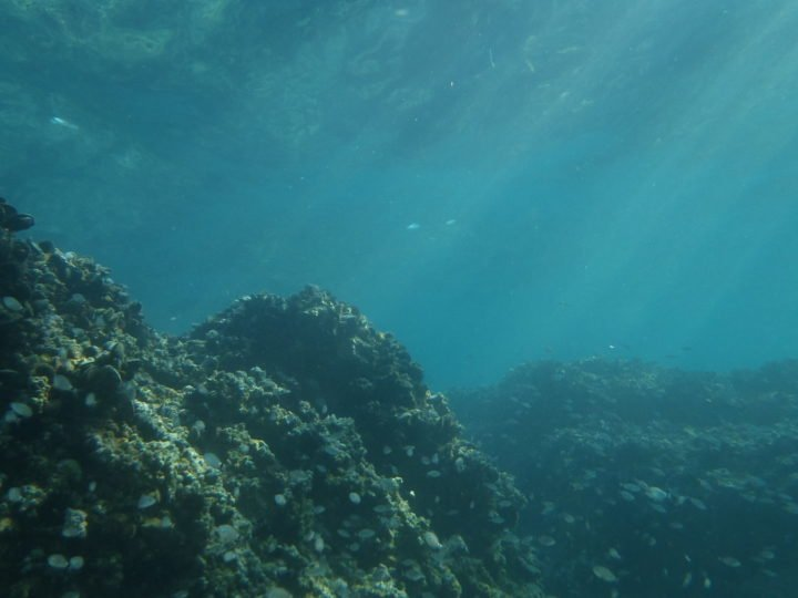 When carbon emissions pass a critical threshold, it can trigger a spike-like reflex in the carbon cycle, in the form of severe ocean acidification that lasts for 10,000 years, according to a new MIT study. Pictured - underwater sea view. Credit:  Dimitris Siskopoulos