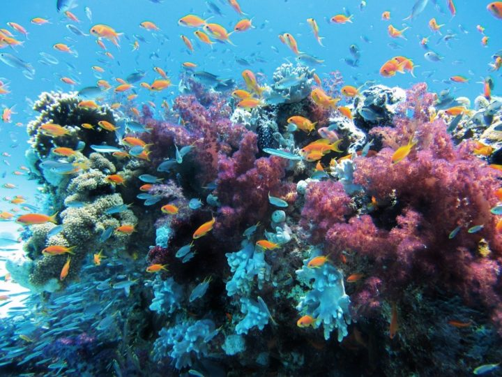 Corals are the foundation for reefs, which provide ecosystems for a variety of species and which can help protect coastal communities from shoreline erosion. A new study offers practical guidelines to help Caribbean corals adapt to warmer, more acidic waters caused by climate change.