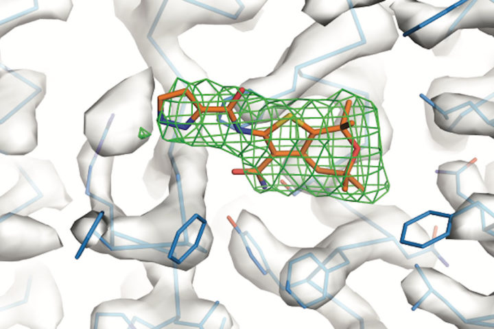"A potentiator (orange) binds to a protein ""hotspot,"" altering the molecule's conformation. Image credit: Laboratory of Membrane Biology and Biophysics at The Rockefeller University"