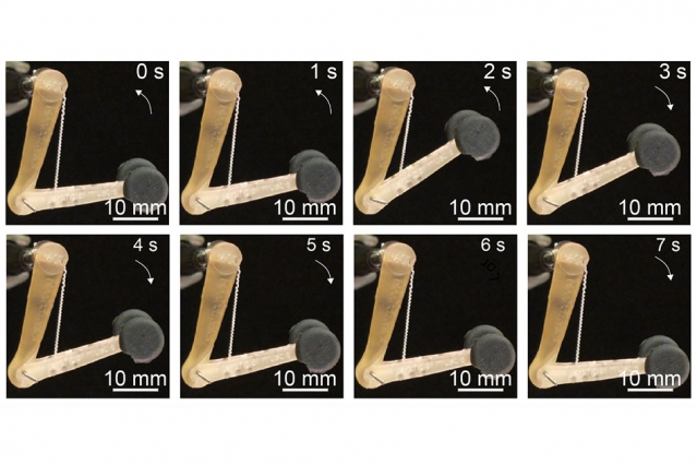The fibers developed by the MIT team can lift 650 times their own weight, and might be used to control robotic or prosthetic limbs. Credit: Courtesy of the researchers