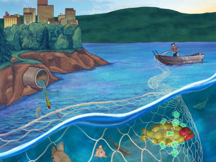 The cover of Inorganic Chemistry illustrates PNNL's work in optimizing nano-sized metal organic frameworks to 'net' and capture a type of industrial contaminant found in many water supplies worldwide. Illustration by Rose Perry, PNNL