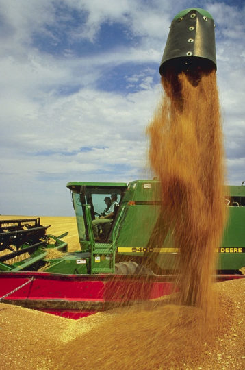 Wheat harvest at the ARS Central Great Plains Research Station in Akron, Colorado. Illustration by Scott Bauer/ARS USDA