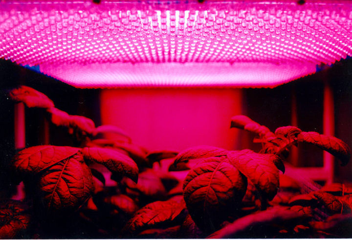 A panel of red LEDs used for illumination for a plant growth. Image credit: NASA Marshall Space Flight Center via Wikimedia, Public Domain