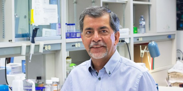 U of A neurologist Jack Jhamandas led a team that found a new treatment significantly improved memory in mice with Alzheimer's disease. The researchers are now developing a drug that could eventually be used to treat human patients. (Photo: Jordan Carson/University of Toronto)