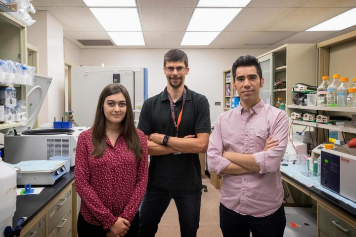 UVA neuroscientists, from left, Megan Chappell, Alban Gaultier and Anthony Fernández-Castañeda are now seeking ways to promote brain repair. (Photo by Dan Addison, UVA Communications)