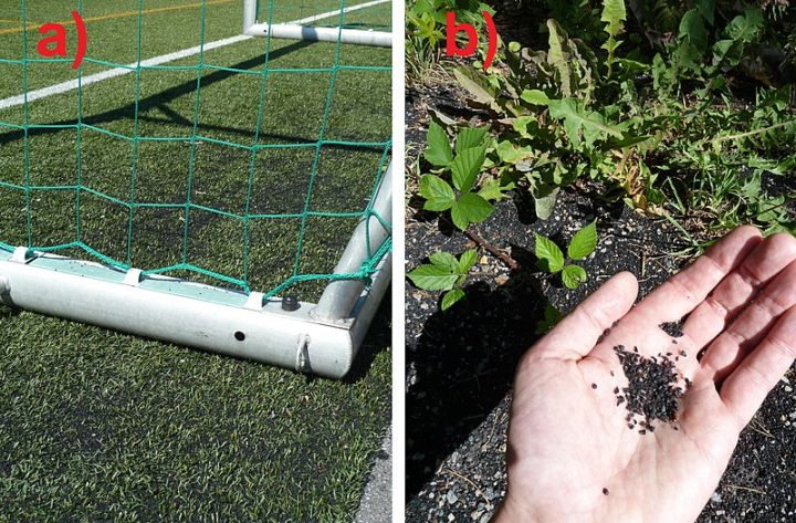 a) Artificial turf football field with ground tyre rubber (GTR) used for cushioning. b) Microplastics from the same field, washed away by rain, found in nature close to a stream. Kristiansand, Norway. Image credit: Soleincitta via Wikimedia, CC-BY-SA-4.0