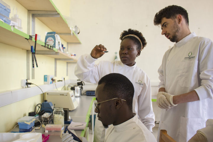 Lenshina Agbor and fellow researchers in the lab in Cameroon. (Image credit: Courtesy Jenny Molloy via Stanford University)
