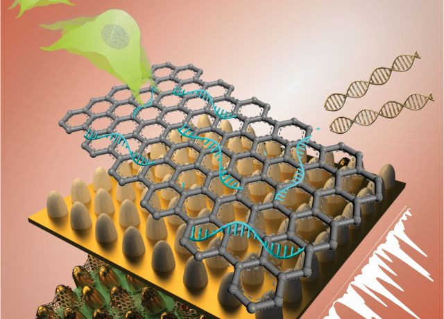 This unique biosensing platform consists of an array of ultrathin graphene layers and gold nanostructures. The platform, combined with high-tech imaging (Raman spectroscopy), detects genetic material (RNA) and characterizes different kinds of stem cells with greater reliability, selectivity and sensitivity than today's biosensors. Image credit: Letao Yang, KiBum Lee, Jin-Ho Lee and Sy-Tsong (Dean) Chueng