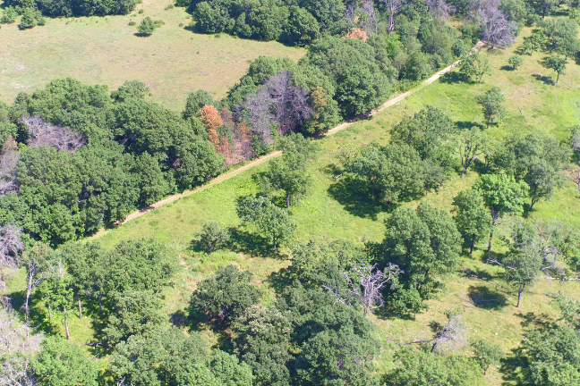 Two of the fields included in the study: after more than nine decades of recovery, the abandoned agricultural field (upper left) still has only about three quarters of the plant diversity and half of the plant productivity found in the oak savanna (lower right), which was never ploughed. Credit: Forest Isbell, College of Biological Sciences