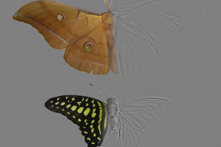 Moths strike out in evolutionary arms race with sophisticated wing design - technology