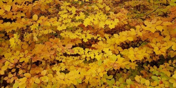 Which factors trigger leaf die-off in autumn? - technology