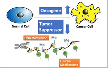 New prediction algorithm identifies previously undetected cancer driver genes - technology