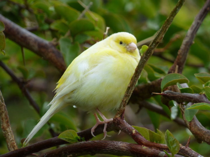 Artificial intelligence helps build a better canary trap for cybersecurity operations - technology